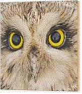 Short-eared Owl Face Wood Print