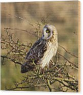 Short-eared Owl In Tree Wood Print