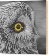 Short-eared Owl Mono Coloured Eye Wood Print