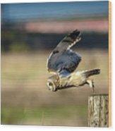 Short-eared Owl Takeoff Wood Print