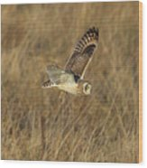 Short-eared Owl With Vole Wood Print