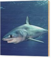 Shortfin Mako Sharks Wood Print
