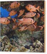 Shoulderbar Soldierfish Wood Print by Dave Fleetham - Printscapes