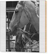Show Horses Wood Print