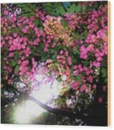 Shower Tree Flowers And Hawaii Sunset Wood Print