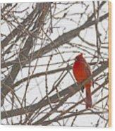 Showing His Colours - Northern Cardinal - Cardinalis Cardinalis Wood Print