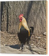 Showy Rooster Posed Wood Print