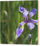 Shreve's Iris Wood Print