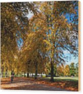 Shrewsbury Autmn Park Wood Print