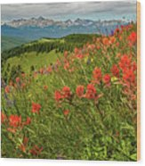 Shrine Pass Wildflowers Wood Print