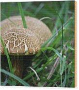 Shrooms Hiding Wood Print