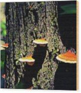 Shroomtree Wood Print