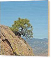 Shrub And Rock At Canon City Wood Print