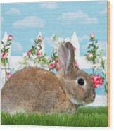 Shy Brown Dwarf Bunny Portrait Wood Print