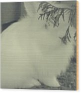 Shy Bunny Wood Print
