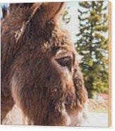 Shy Burro In Cripple Creek Wood Print