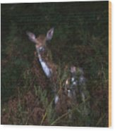 Shy Fallow Deer 4 Wood Print