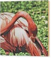 Shy Flamingo Wood Print