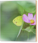 Shy Little Yellow Butterfly Wood Print