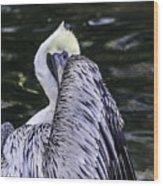Shy Pelican Wood Print