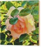 Shy Rose Wood Print