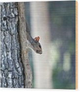 Shy Squirrel Wood Print