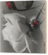 Shy White Rose Wood Print