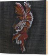 Siamese Fighting Fish Wood Print
