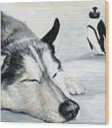 Siberian Huskey Wood Print