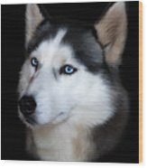 Siberian Husky Dog Wood Print by Julie L Hoddinott