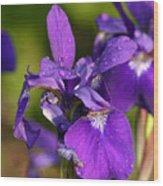 Siberian Iris After Rain Wood Print