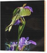 Siberian Iris And Luna Moth Wood Print