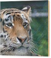 Siberian Tiger 2 Wood Print