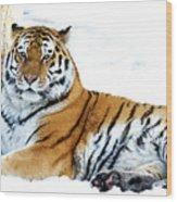 Siberian Tiger Amur Tiger Wood Print