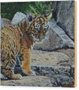 Siberian Tiger Cub Wood Print