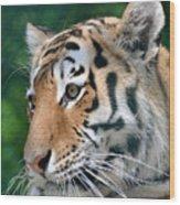 Siberian Tiger Wood Print