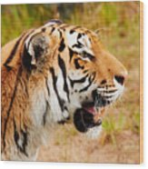Siberian Tiger In Profile Wood Print
