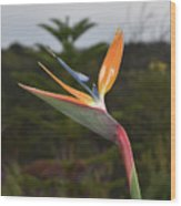 Side View Of A Beautiful Bird Of Paradise Flower  Wood Print