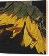 Sideview Sunflower Wood Print