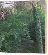 Siena-48 Wood Print