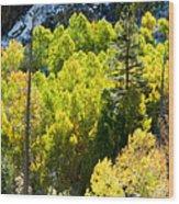 Sierra Fall Forest Wood Print