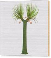 Sigillaria Tree Wood Print