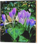 Signs Of Spring I Wood Print
