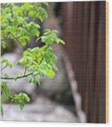 Signs Of Spring In American Fork Canyon Utah Wood Print