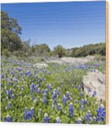 Signs Of Spring In Texas Wood Print