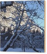 Silence In The Trees Yosemite Wood Print