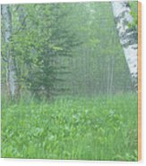 Silent Birch Wood Print