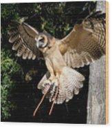 Silent Flight Wood Print