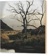 Silent Lucidity Wood Print