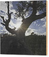 Silhouette Of A Gnarled Tree Wood Print